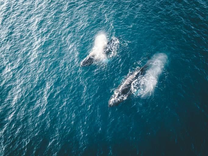 Rescatan a 40 ballenas varadas en Nueva Zelanda