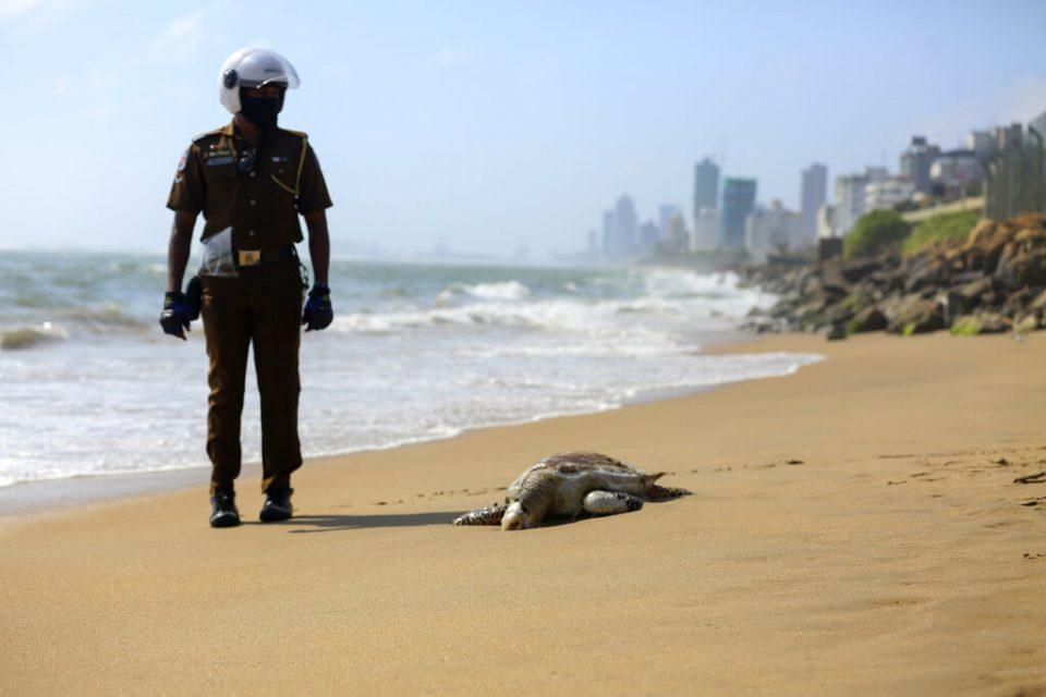 Aparecen tortugas muertas en Sri Lanka, tras fuego en un barco